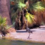 """Crane and Palms"" by GalleryPhotoCanvas"