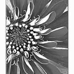 """Budding Flower"" by TamIshArt"