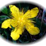 """""""Yellow Star Beauty"""" by look2day"""