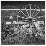 """Wagon wheel"" by TamIshArt"