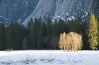 Ahwanee Meadow in Winter, Yosemite