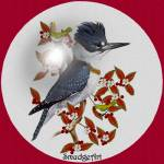 """""""#0390 Belted Kingfisher"""" by MadelineAllen"""