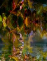 Autumn Leaves Abstract I