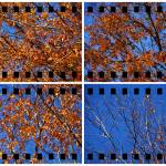 """""""Study of Leaves Group"""" by timothycook"""