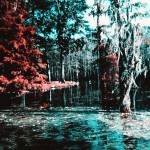 """Louisiana  Bayou Swamp"" by Persuaded"