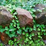 """Vine Covered Stones"" by Persuaded"