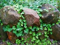 Vine Covered Stones