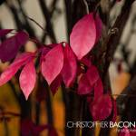 """""""00303-203-CLB_1418"""" by christopherbacon"""