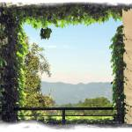 """Framing Napa"" by jbjoani2"