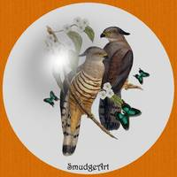 #0395 Crested Hawk