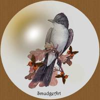#0397 Eastern Kingbird
