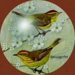 """""""#0405 Palm Warbler"""" by MadelineAllen"""