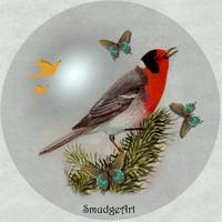 #0407 Red Faced Warbler
