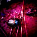 """""""Beetle"""" by johnburnett"""