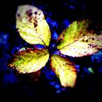 """Butterfly Leaves"" by johnburnett"