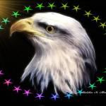 """Eagle Stars"" by MadelineAllen"