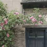 """Ancient Rose Covered Door, Oxford, England"" by SederquistPhotography"