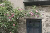 Ancient Rose Covered Door, Oxford, England