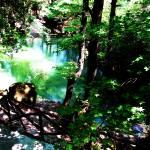 """""""Valley of Butterflies - Rhodes Greece"""" by arttraveler"""