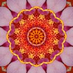 """Pink Orchid Mandala 1"" by lightvision"