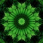 """Ferns Mandala 1"" by lightvision"