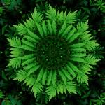 """Fern Mandala - 2"" by lightvision"