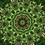"""Burgundy Green Mandala 3"" by lightvision"