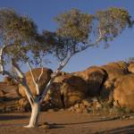 """Devils Marbles Gum Tree"" by daveoh"