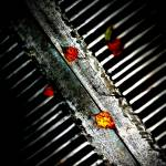 """Leaves on Grate"" by johnburnett"