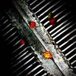 """""""Leaves on Grate"""" by johnburnett"""