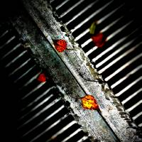 Leaves on Grate Art Prints & Posters by John Burnett