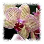 """""""Orchid #1"""" by MadelineAllen"""