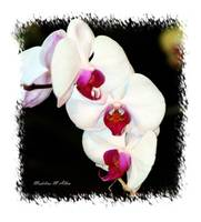 Orchid #3