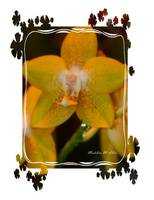Orchid #9