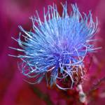 """""""Thistle"""" by masteringyou"""