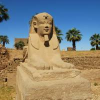 Sphinx at Luxor Temple, Egypt