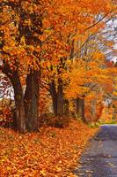 Autumn in New England!!