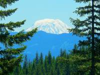 Across The Forest To Mount Adams