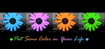 Put Some Color In Your Life