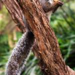 """Squirrel Tree 2"" by PhotographerAri"