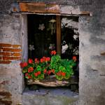 """Italian Window"" by JannArtPhotography"