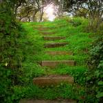 """Stairs of green"" by amymillerphotos"