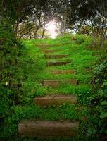 Stairs of green
