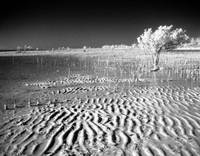 Low Tide at Yamacraw Beach IR