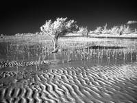 Low Tide Infrared II
