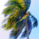 """Jamaica Palm"" by OrbitalJoe"