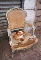 Orange tabby cats resting on a chair - Alexandria