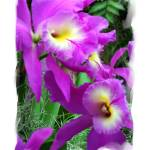 """""""28 - Orchid"""" by MadelineAllen"""