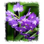 """""""33 - Orchid"""" by MadelineAllen"""