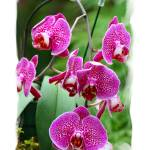 """""""41 - Orchid"""" by MadelineAllen"""